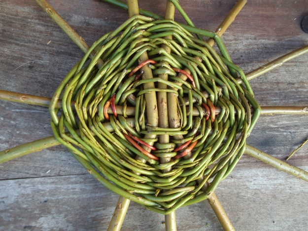 Willow basket making Feb  Permaculture @ Bealtaine Cottage