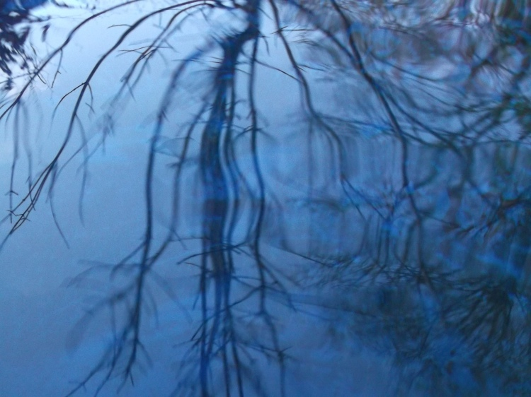trees reflected in water barrel  Permaculture @ Bealtaine Cottage 022
