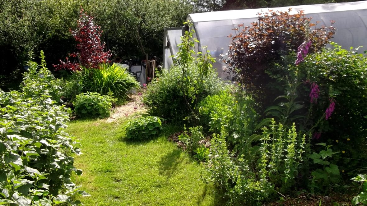 permaculture gardens of Bealtaine Cottage, No dig