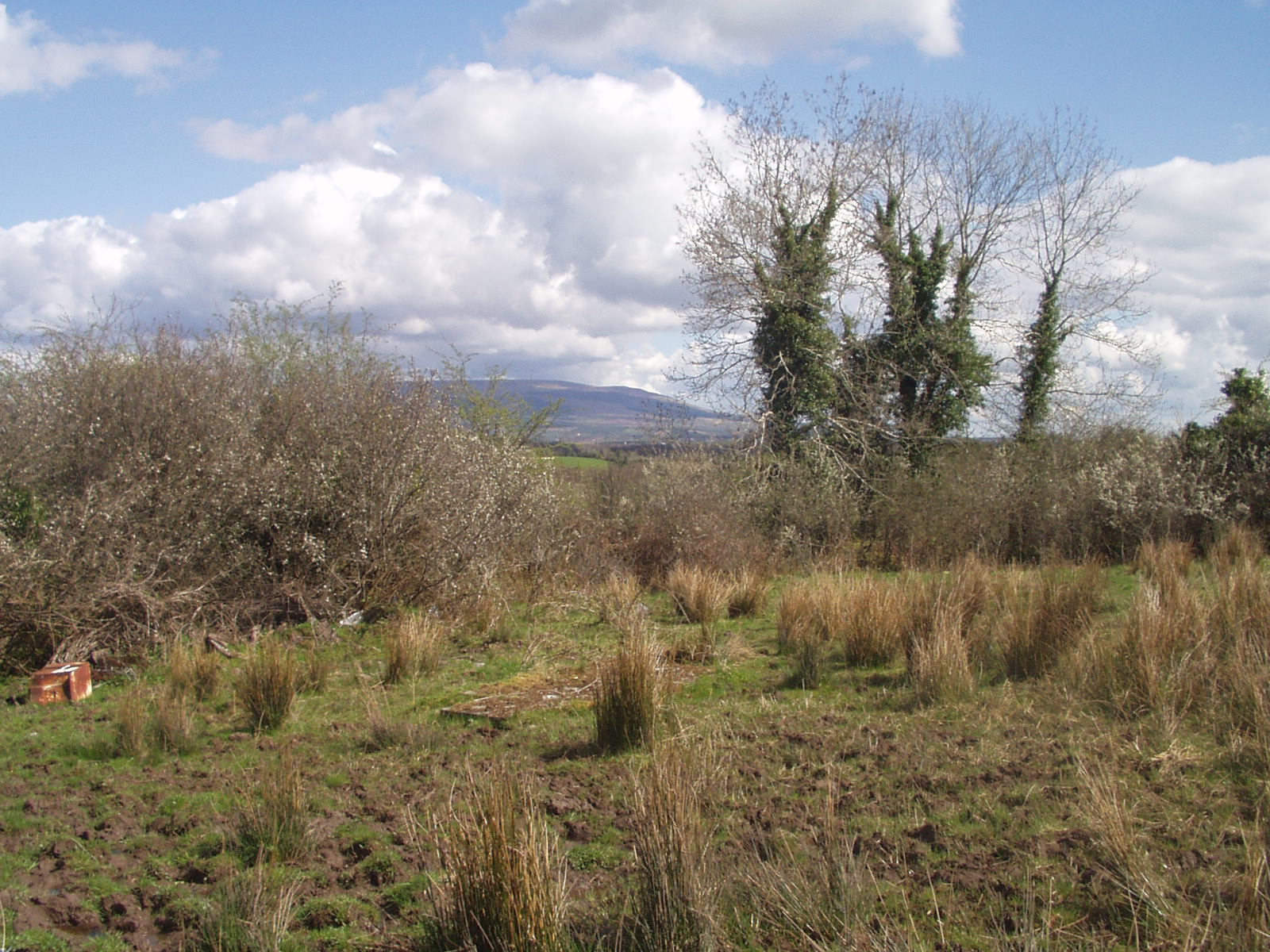 Bealtaine Cottage before permaculture