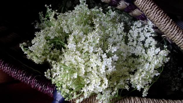 Elderflower herb