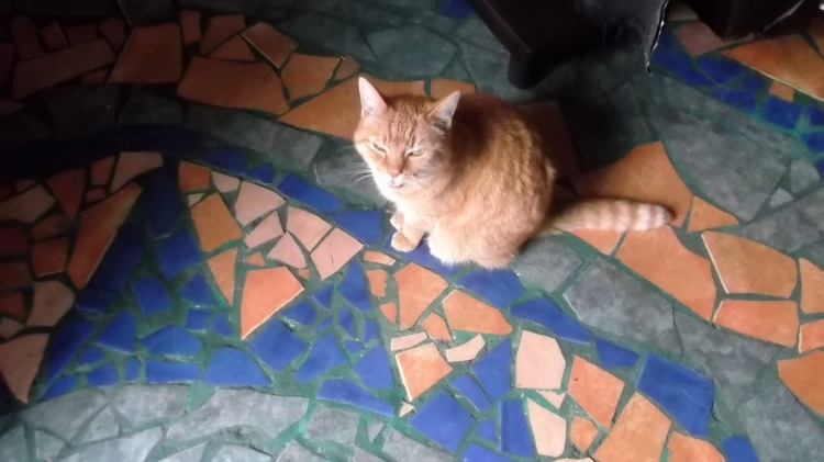 Bealtaine Cottage Permaculture Cat...Missy