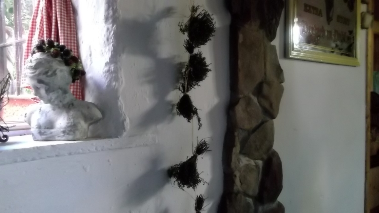 Herbs drying at Bealtaine Cottage