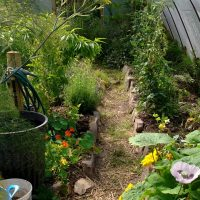 Perennial Vegetables in a Permaculture Garden