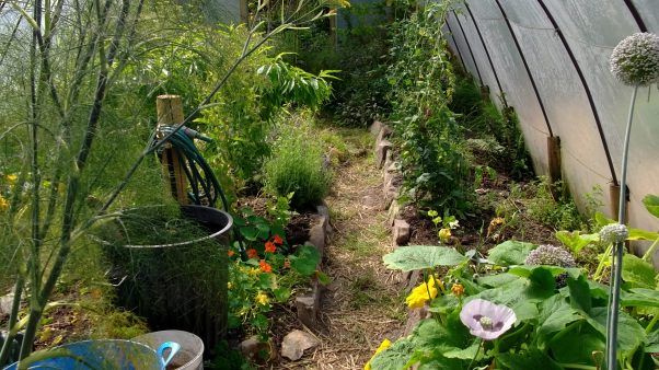 Bealtaine Cottage summer in the permaculture tunnel