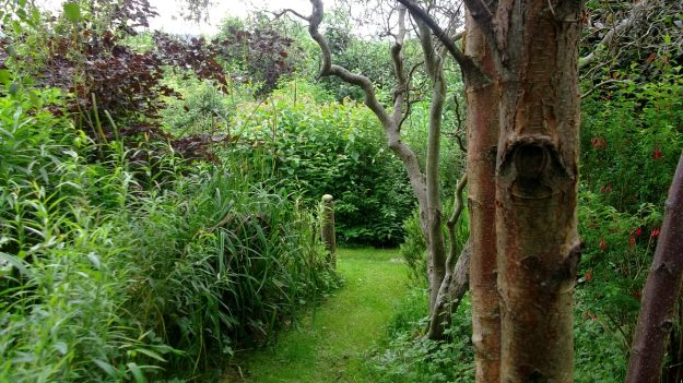 Bealtaine Cottage Twisted Willow and Birch