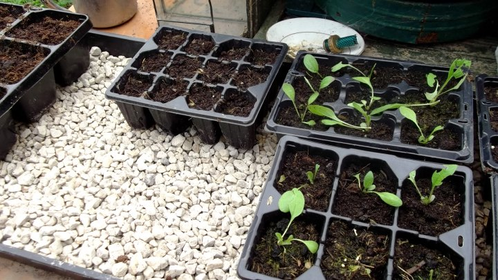 Bealtaine Cottage sowing seeds