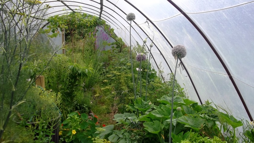 Bealtaine Cottage permaculture tunnel