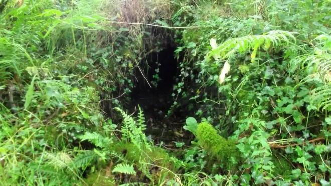 Bealtaine Cottage  badger sett