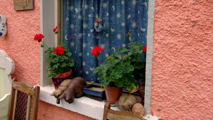 Perlagoniums and cats on the window sill