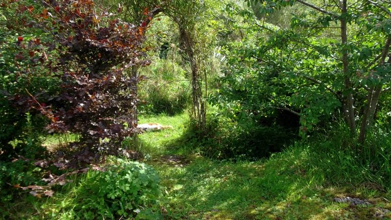 Bealtaine Cottage permaculture paradise