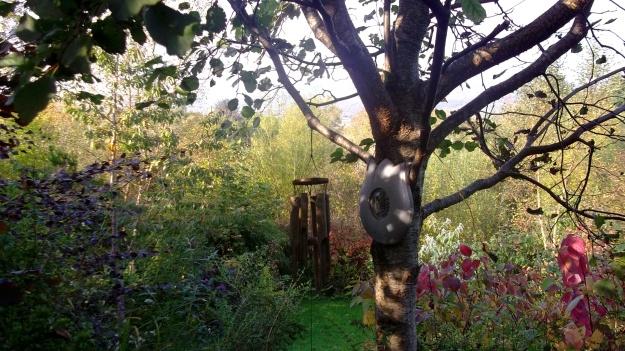 Bealtaine Cottage Alder tree