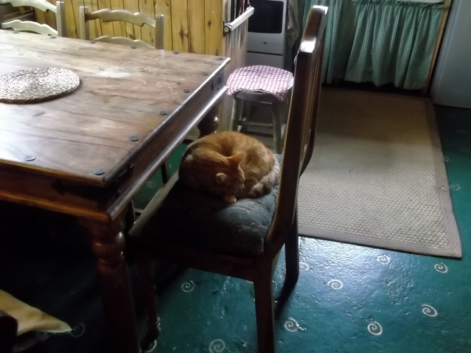 Missy Cat asleep at Bealtaine Cottage Permaculture