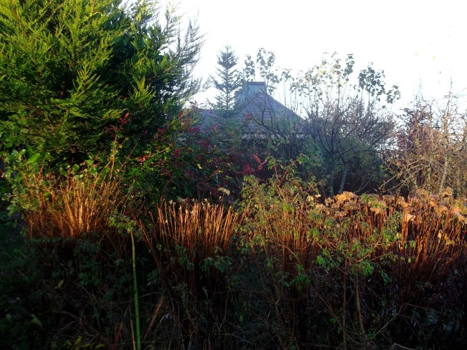 Bee friendly hedge at Bealtaine Cottage Permaculture 003