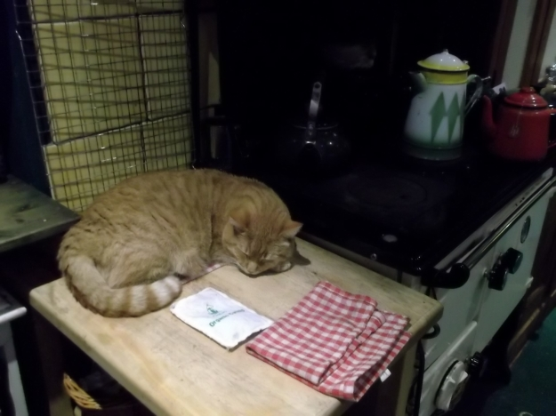 Bealtaine Cottage Christmas Cat