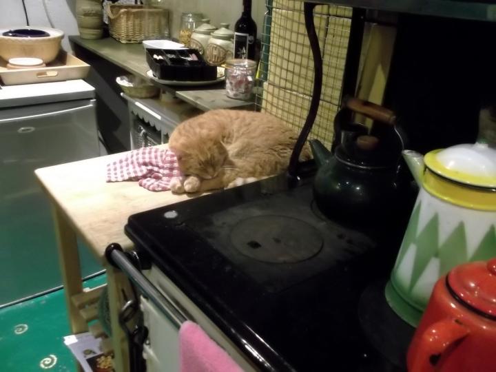 Missy, the solstice cat