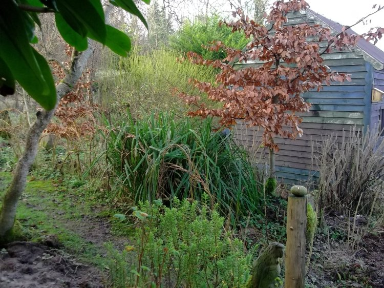 January in the permaculture gardens at Bealtaine Cottage