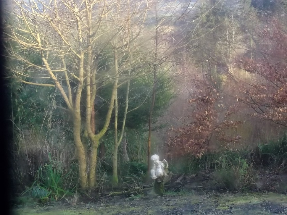 Angel and Field Maple at Bealtaine Cottage