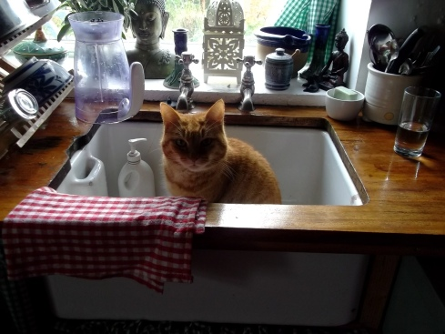 Missy Cat in the sink at Bealtaine Cottage