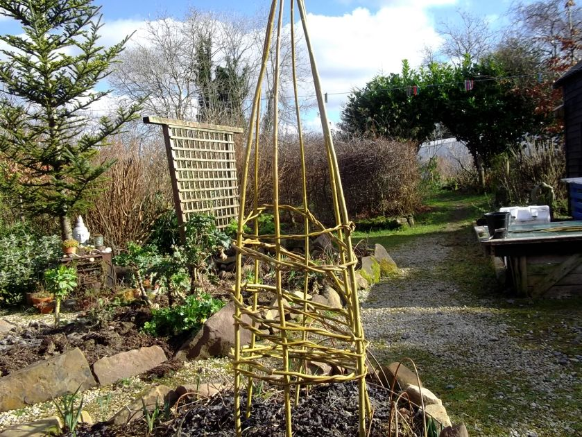 Willow wigwam in a permaculture garden in February