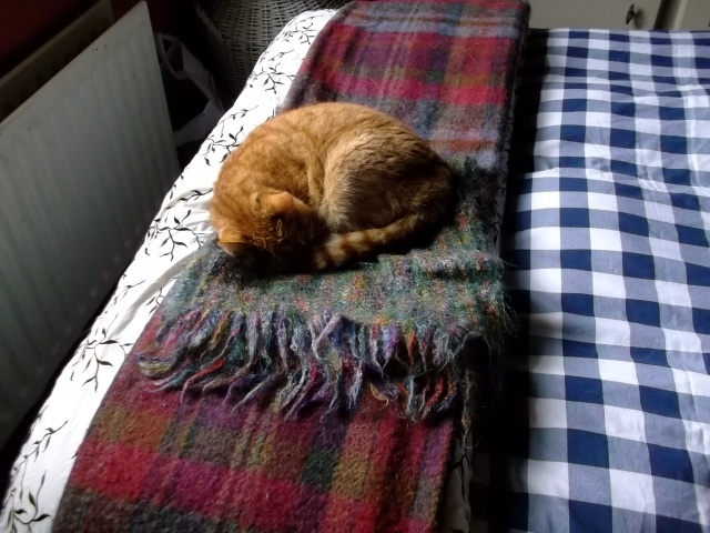 Missy Cat sleeps on the bed at Bealtaine Cottage