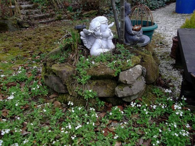 Arabica and angel in permaculture gardens of Bealtaine Cottage