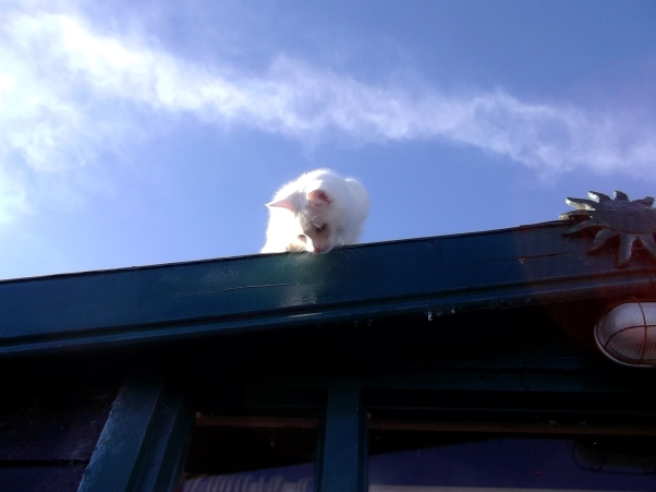Sammy Cat on the roof of the porch at Bealtaine Cottage Ireland