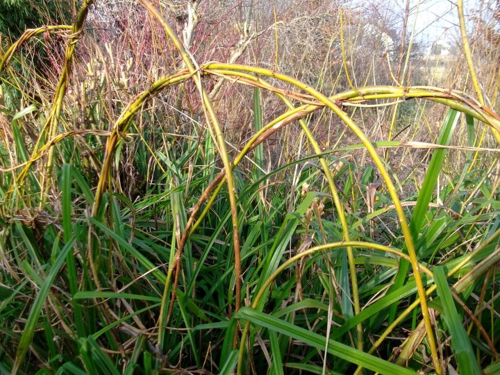 Willow and Sedge at bealtaine Cottage