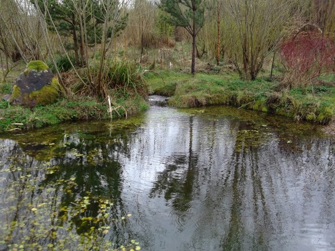 Lower pond in flood at Bealtaine Cottage permaculture gardens