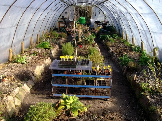 Polytunnel at Bealtaine Cottage permaculture gardens in April 2013