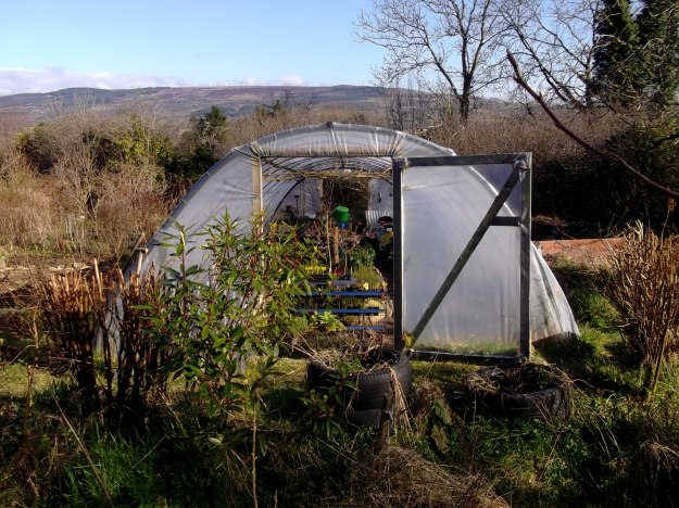 Polytunnel at Bealtaine Cottage Permaculture Gardens