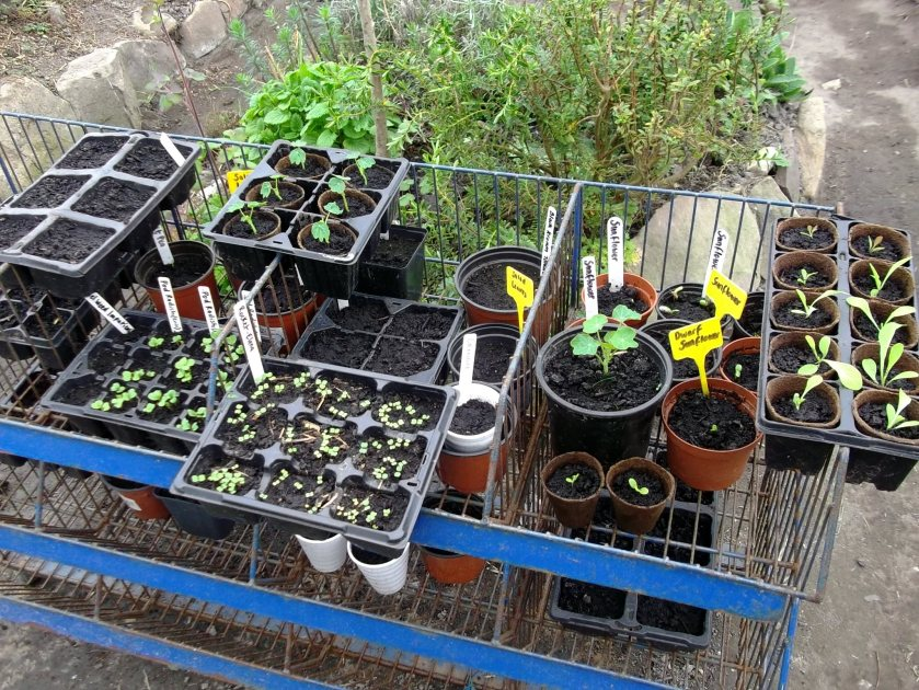 Seeds in the permaculture gardens