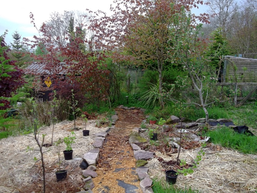 New orchard at Bealtaine Cottage