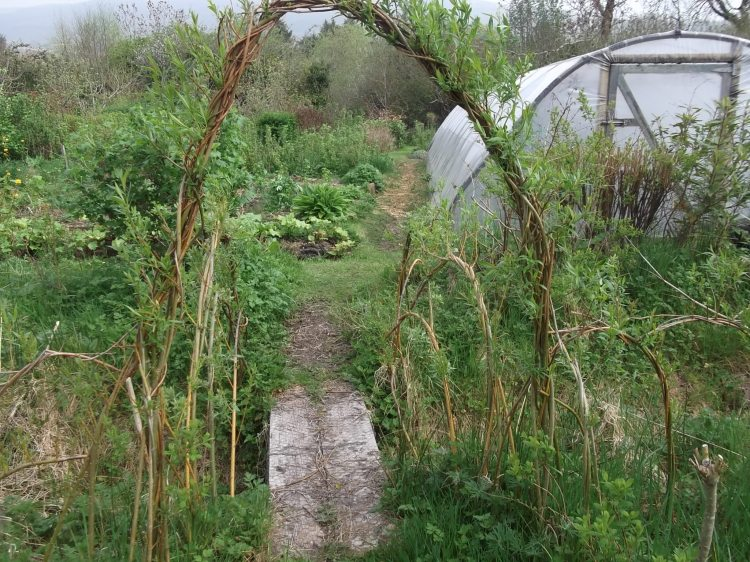 willow arch and tunnel at Bealtaine Cottage