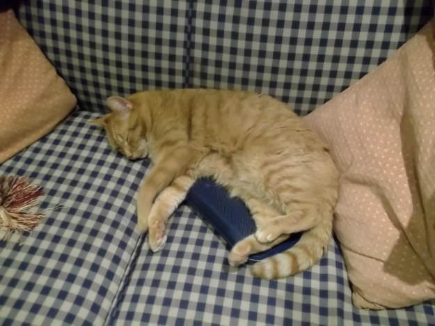 Missy relaxing on a hot water bottle to ease her tumour...it works well!
