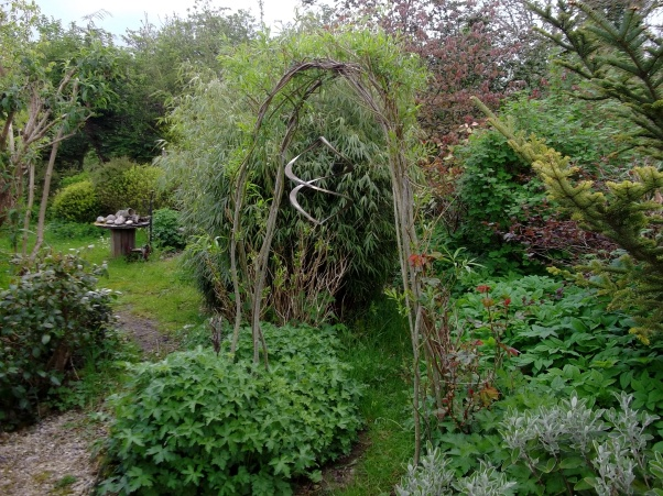 Wind Spiral on Willow arch in the permaculture gardens today