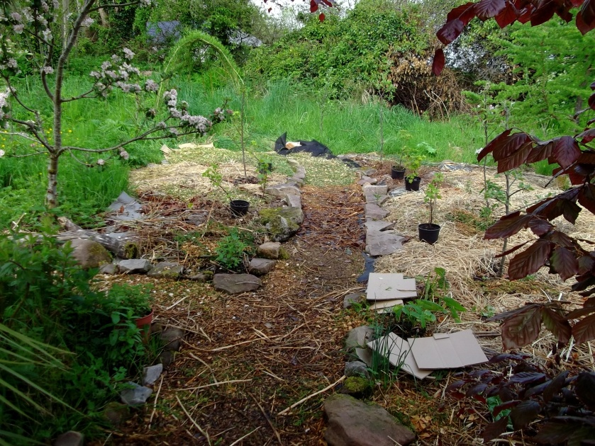 New mulched permaculture orchard