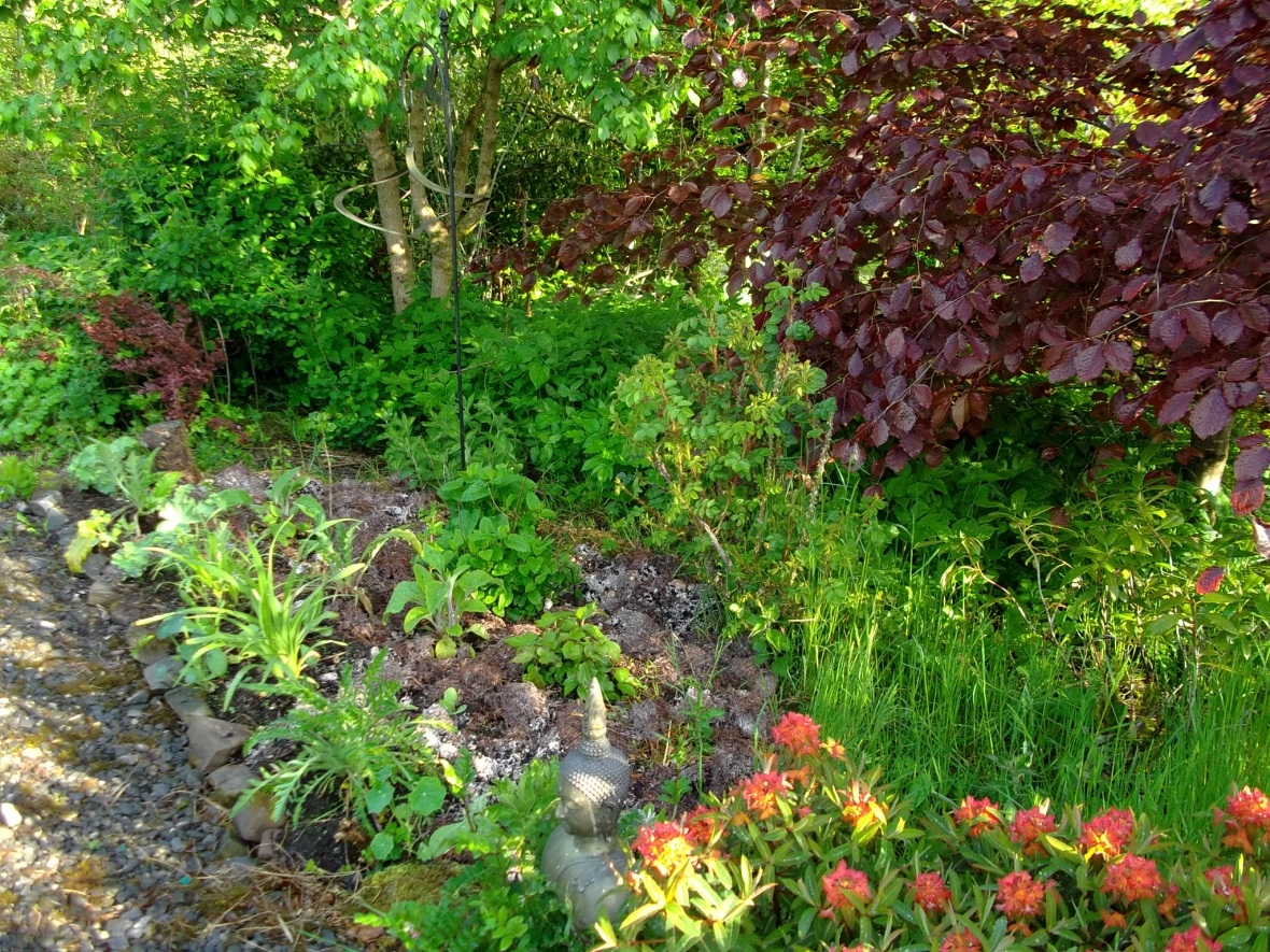 Plant sanctuary at Bealtaine Cottage Ireland