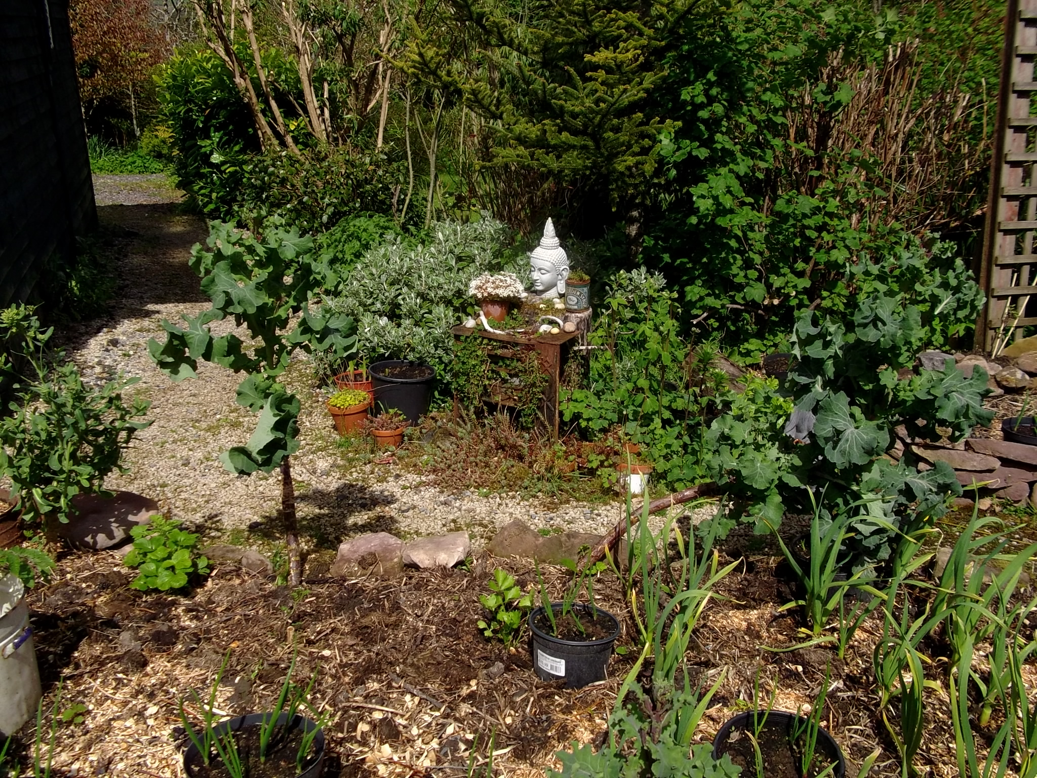 potager raised beds at Bealtaine Cottage | Bealtaine Cottage ~ 14 ...