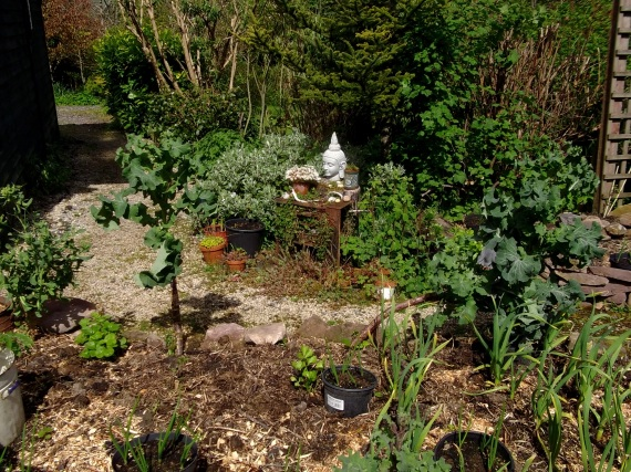 potager raised beds at Bealtaine Cottage