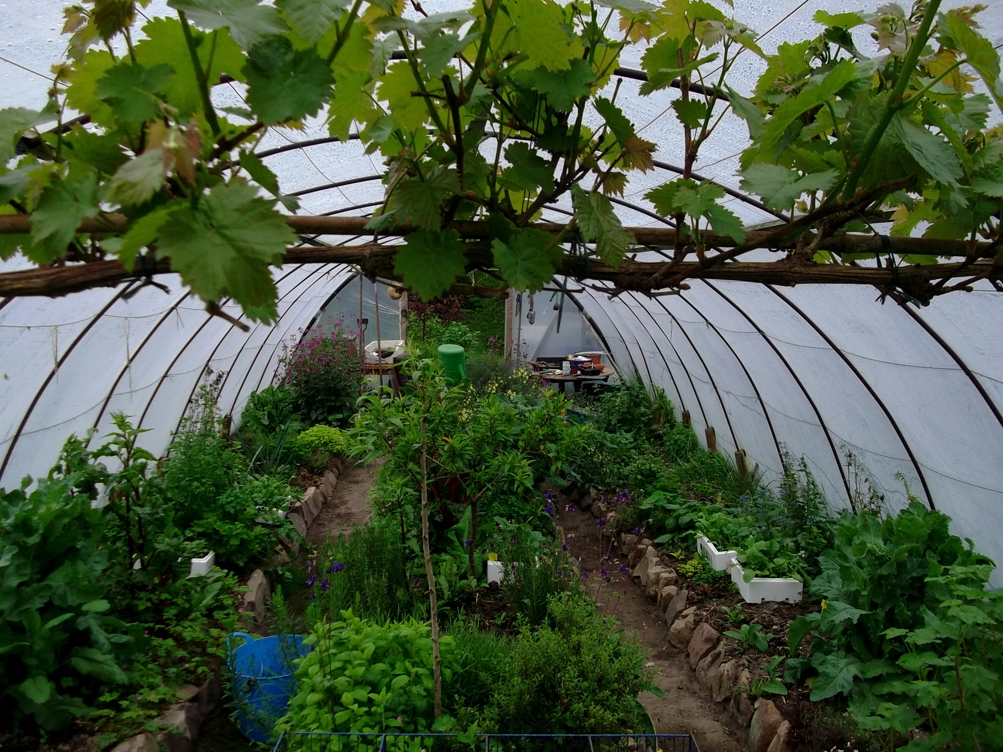 Permaculture Tunnel at bealtaine Cottage