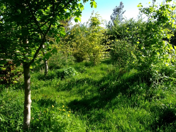 Some of the trees planted at Bealtaine Cottage