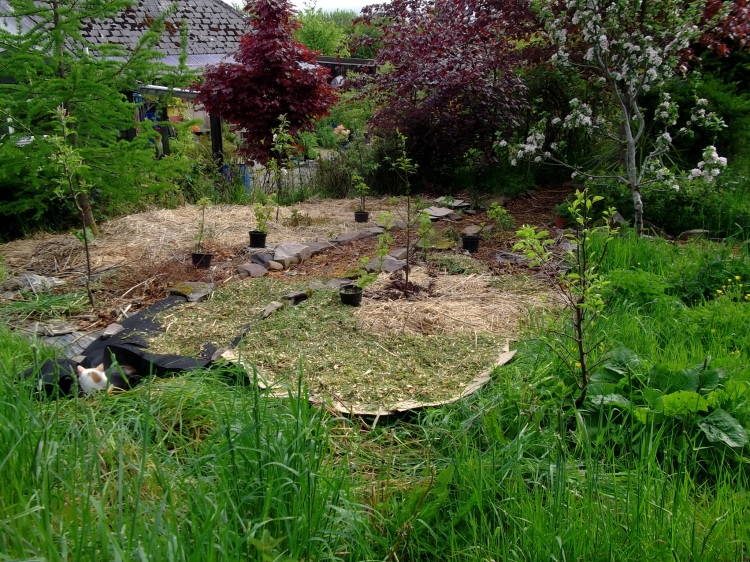 Permaculture Orchard at Bealtaine Cottage
