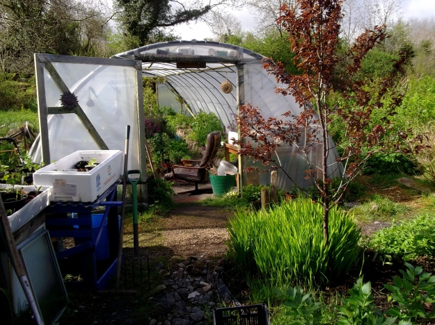 Home made greenhouse at Bealtaine Cottage