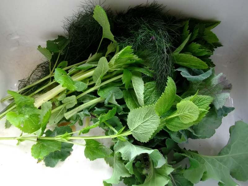 organic herbs from the permaculture gardens