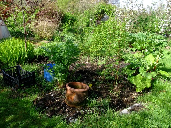 Raspberries and Rhubarb in the permaculture gardens at Bealtaine