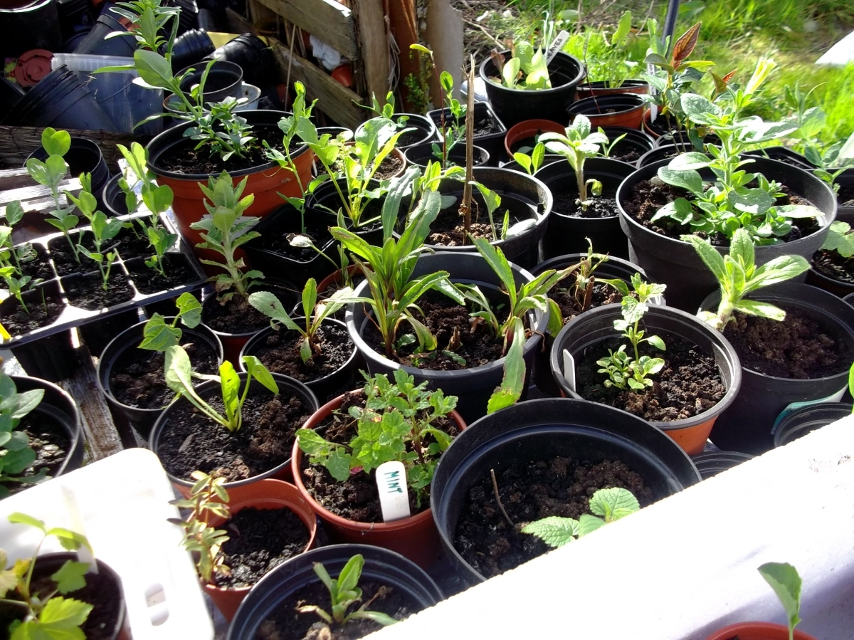Seedlings at Bealtaine Cottage