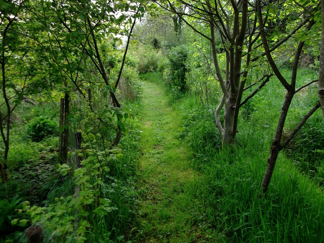 Lime tree walk at Bealtaine Cottage