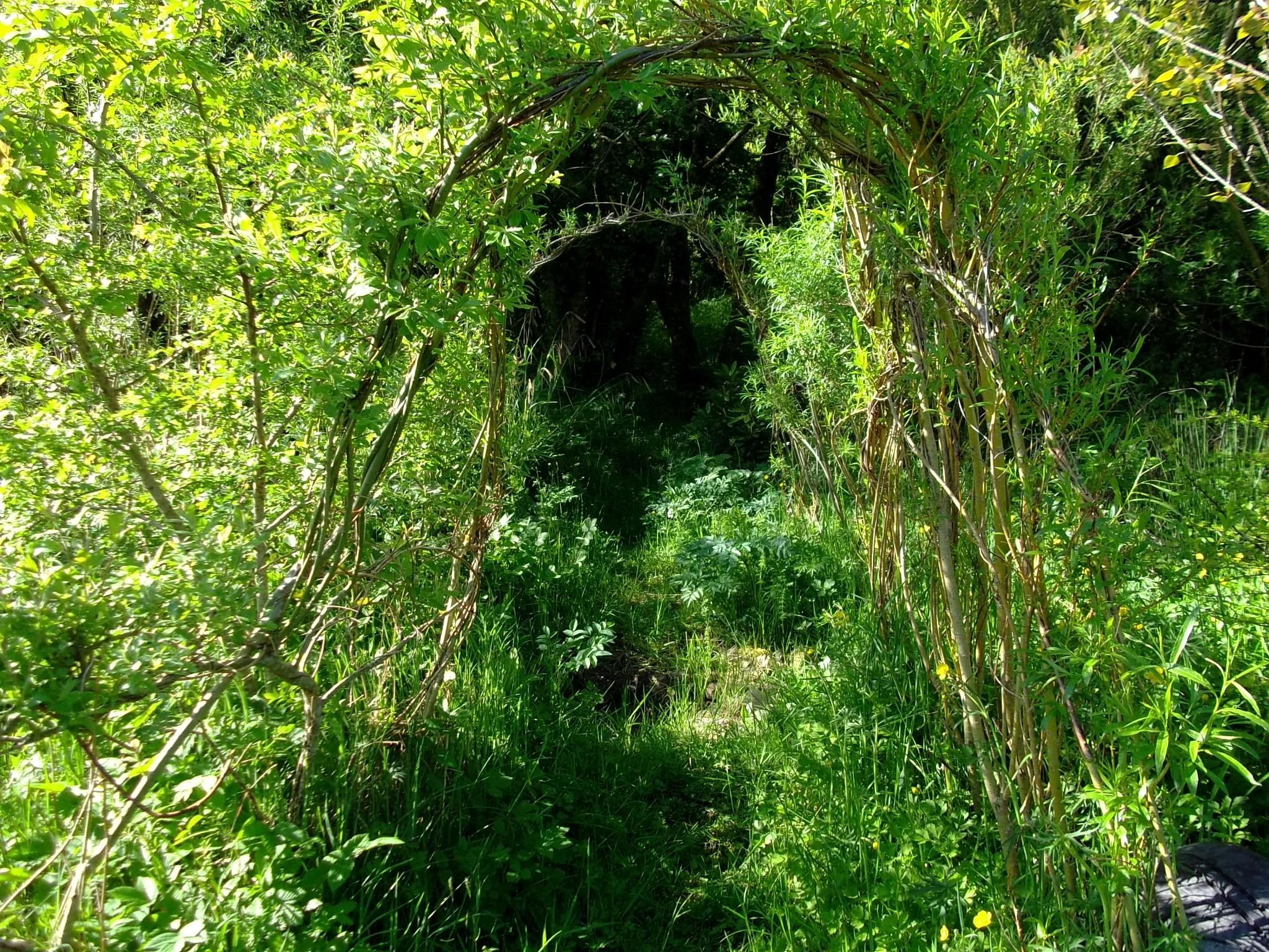 Willow arch into the Fairy woodland at Bealtaine Cottage