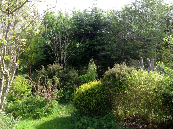 Permaculture Gardens of Bealtaine Cottage